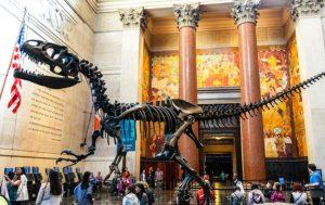 American-Museum-of-Natural-